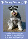 "Miniature Schnauzer-Happy Birthday - ""I'm Adopted"" Theme"